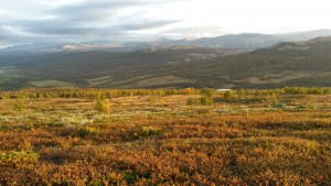 View from fieldwork on Armodshøkollan, Dovre Mountains.