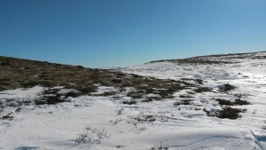 Photo by Mia Vedel Sørensen: Snow depth gradient from ridge to deeper snow covering Betula nana and Salix shrubs near Hjerkinnshøe, Dovre Mountains.