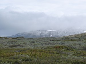 Willow_snow_shower_08-07-15_3