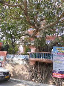 A wall around a tree in Rishikesh. This was not a unique sight to this city. We similar things in Delhi as well.  Photo: Mia Vedel Sørensen