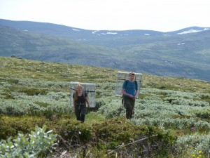 Kristin Odden Nystuen and Øystein Opedal carrying exclosures. Photo: Mia Vedel Sørensen